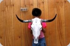 Tête de vache Texane taille M   de 80  à 95 cm  d'Envergure