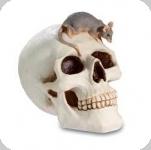 Crâne tête de mort avec  Souris