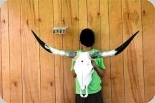 Tête de vache Texane taille L   de 90 cm à 120 cm d'Envergure