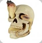 Crâne tête de mort SERPENT mêlé