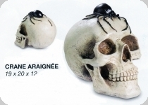 Crâne têtede mort Araignée