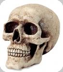 Crâne tête de mort tirelire Gothique